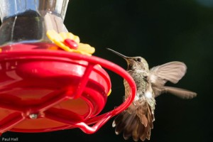 Breakfast time at the Feeder