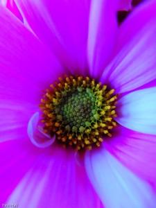 Flower, Fuji X20