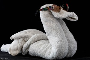 Swan with shades