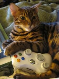 Kuri plays Xbox
