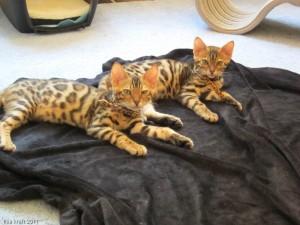 Loki and Kuri